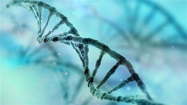 Des branches d'acide désoxyribonucléique (ADN)