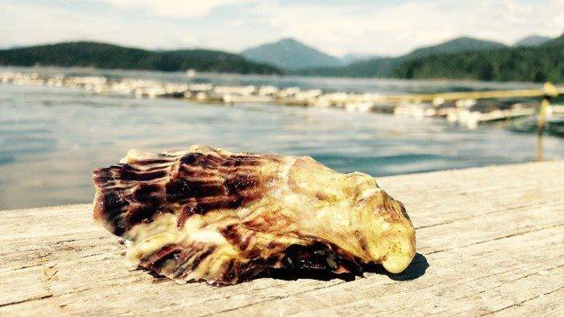 Les huîtres et le norovirus.