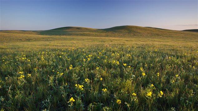 Un paysage du sud de la Saskatchewan