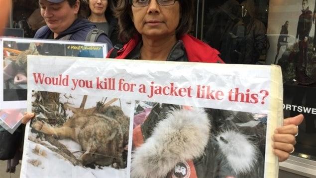 Les défenseurs des droits des animaux visent Canada Goose et son utilisation de la fourrure de coyote qui recouvre l'intérieur des manteaux d'hiver de l'entreprise.