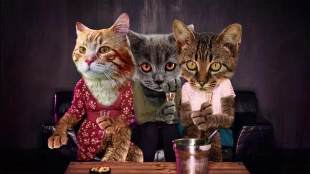 Un photo collage de trois chats habillés en humain boivent du vin sur un divan.