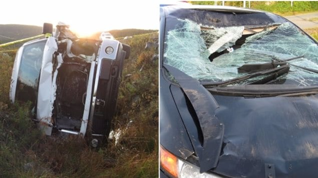 Collisions between moose and cars can be fatal for the animal and humans.