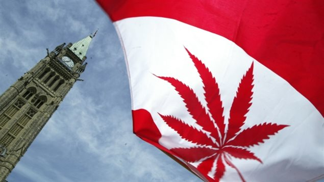 Les individus auraient le droit de cultiver jusqu'à quatre plants de cannabis pour leur usage personnel.