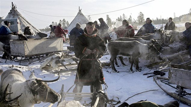 Nenets herdsmen prepare to leave the site outside the town of Nadym, 3,800 km North-East of Moscow, in Siberia, 14 March 2005 to find a new place for stay.