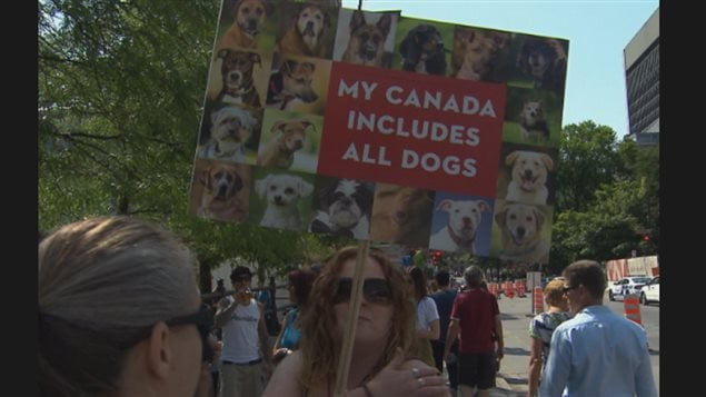 Quebec's Premier said in June last year (prior to the Montreal demo shown here ) that he would probably follow Ontario's lead o ban pit bulls. Groups are planning a similar demonstration against the provincial proposal this Saturday in the central Lafontaine Park