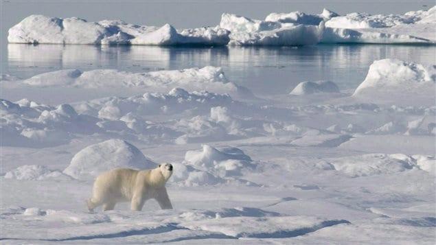 Un oso polar en el hielo en la Bahía de Baffin, en el Ártico.