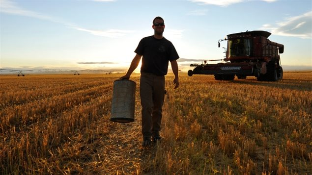 A worker carries an air filter during wheat harvest on a farm in Alberta. The 2016 Census of Agriculture shows oilseeds like canola are the bigges crop in Canada