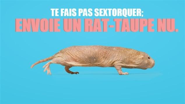 Le rat-taupe nu est un rongeur d'Afrique méconnu. Rose et dépourvu de poils, il mesure de 7 à 10 centimètres de long. Il fera parler les garçons à coup sûr, on l'espère, et leur offrira quelque chose à envoyer à la place d'images de nudité.