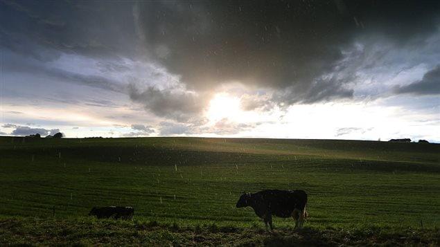Un champ sous la pluie