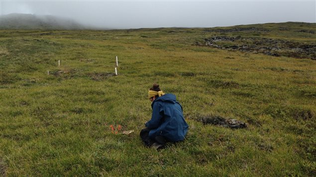 Northern alpine tundra in the southwest Yukon, where dummy caterpillars experienced low rates of predation.