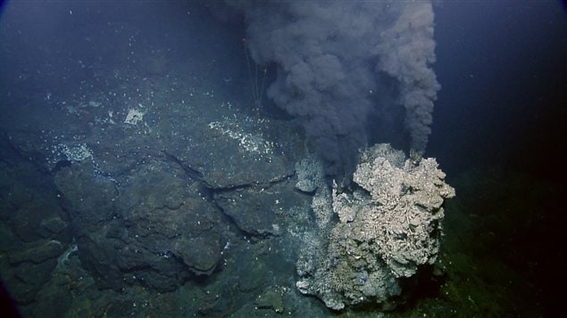 The fresh deposits of the vent stand in start contrast to the dark seafloor around them.