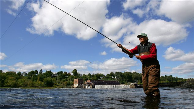 The stocks are so low in the United States, that anglers are no longer allowed to fish Atlantic salmon.