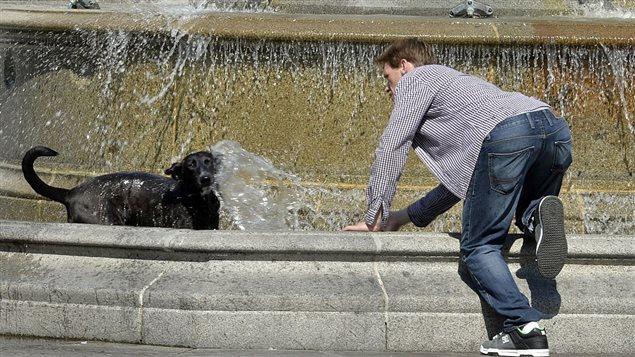 Dans les villes, animaux et humains subissent les effets de l'îlot de chaleur urbain