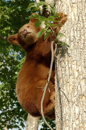 There are bears, geese, various species of birds and other animals on the territory.