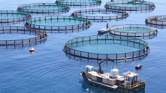 Aquaculture durable