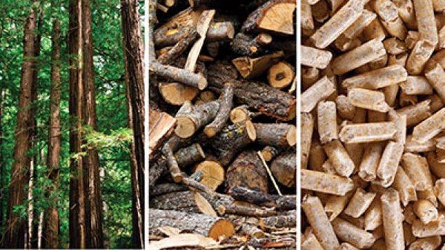 La biomasse forestière résiduelle