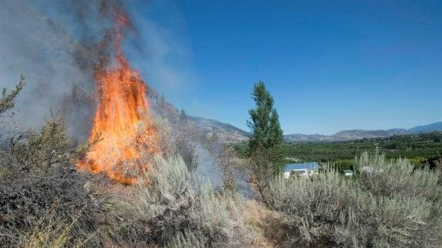 BC省内陆地区的森林火灾更加严重