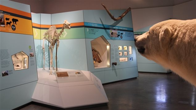 The Canadian Museum of Nature is celebrating the Arctic with special displays and activities during this summer of 2017.