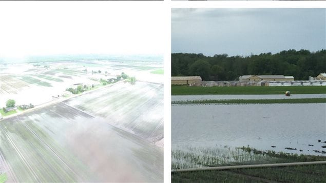 Aerial view of the flooding, and completely flooded field in Holland Marsh. Once crops have been flooded for 24-48 hours, they are lost.