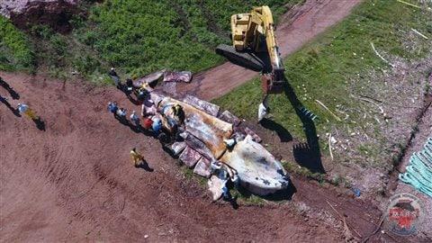La carcasse de la baleine noire autopsiée à l'Île-du-Prince-Édouard jeudi, vue des airs. Photo : Marine Animal Response Society