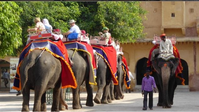 Animal rights groups say venues offering elephant rides and shows almost always mistreat the animals and keep them in poor unnatural conditions.