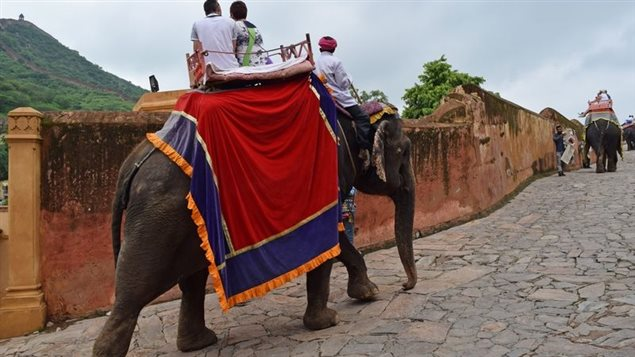 World Animal Protection makes several suggestions to improve captive elephant lives and their handlers, while working to end the practice of keeping elephants for tourist rides and shows