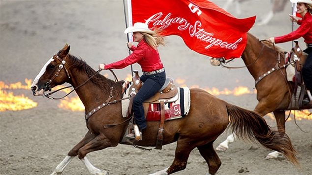 Riders in the arena flying the Calgary Stampede flag in 2013 photo. the 2017 edition of this huge international event starts officially today