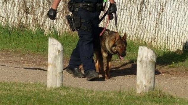 Un policía junto a su perro en Regina, Saskatchewan.