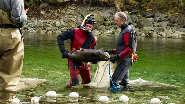 The resort has spent millions to bring the salmon back to a nearby river.