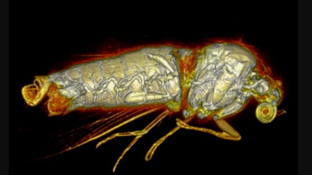 Insects can withstand the low oxygen levels and high doses of radiation needed to get an image of their insides.