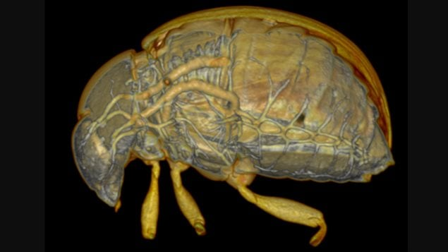 It is useful for scientists to be able to see the inner workings of insects and how they develop over time.
