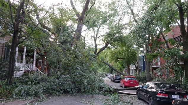 Parts of Montreal's Notre-Dame-de-Grâce neighbourhood are littered with broken branches and uprooted trees after a microburst hit the area Tuesday afternoon. (Simon-Marc Charron/Radio-Canada)