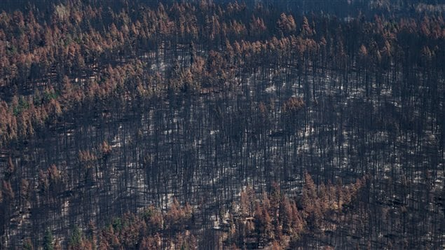 Trees burned by wildfire are seen in this aerial view from a Canadian Forces Chinook helicopter as Prime Minister Justin Trudeau views areas affected by fire near Williams Lake, B.C., on Monday, July 31, 2017.