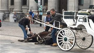 An image from a video showing a horse collapsed in Old Montreal has been shared widely on social media.