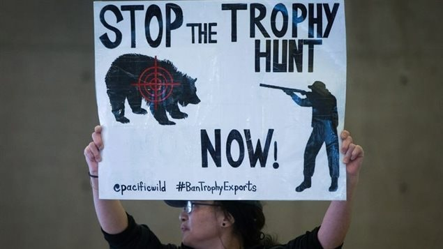A recent survey commissioned by an eco-tourism gropu in the west coast province showed that about three-quarters of rural British Columbians oppose the grizzly bear trophy hunt,