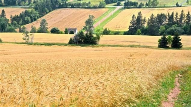 Farmland prices have been rising quickly across Canada, some hint that it's due in part to corporate and foreign land grabs.