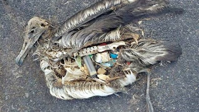Many fish and other sea animals including seabirds are dying, slow painful deaths after mistaking floating plastics as food.