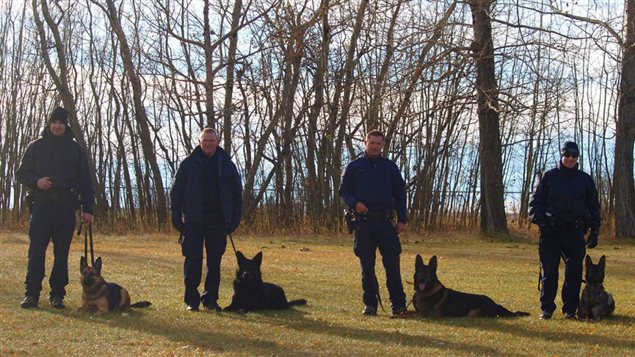 These are the first four RCMP dog teams trained or in training to detect human remains.
