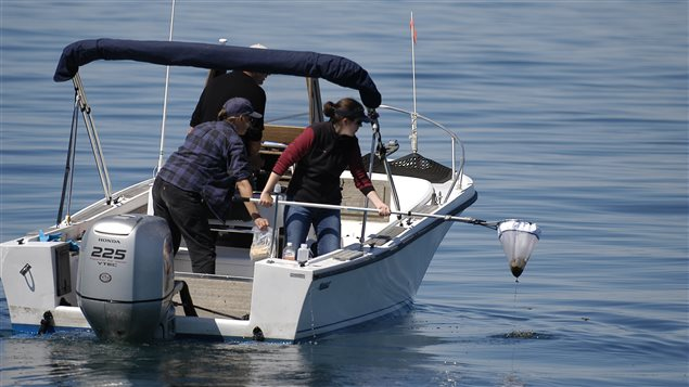 Researchers with the Ocean Health and Marine Stress Lab at the Anderson Cabot Center for Ocean Life at the New England Aquarium collect samples of whale feces.