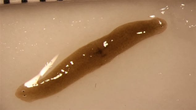 When this worm went to the International Space Station, it had one head. Now it has two.