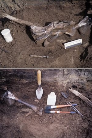 Bones from Protarctos abstrusus were found at the Beaver Pond site on Ellesmere Island.