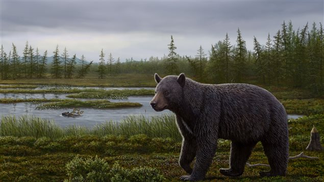 Artist's reconstruction of a primitive bear based on fossils found 1,000 km north of the Arctic Circle.