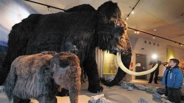 Could we resurrect the wooly mammoth, or at least something very close to it? Science is edgng closer to doing such things, but should they?