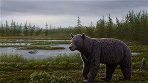 Artist's reconstruction of a primitive bear based on fossils found 1,000 km north of the Arctic Circle.Photo Credit: Mauricio Anton/Canadian Museum of Nature