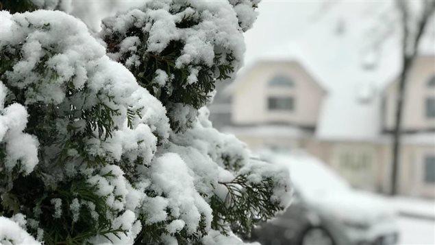 الثلج يغطي الأشجار