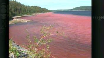 Des résidus de bauxite colorent la rivière