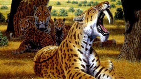 smilodon-tigre
