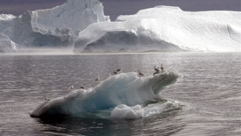 Arctique-glace