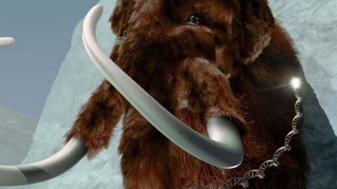 mammouth-adn