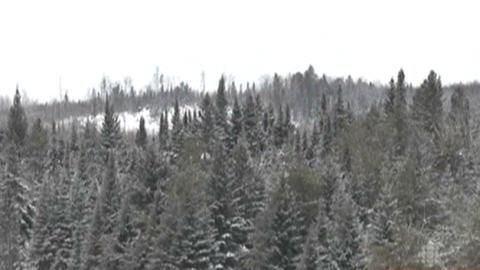 Forêt boréale en hiver